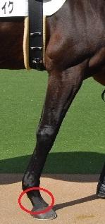 馬の前脚の繋